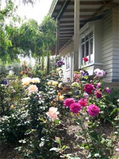 Take some time to smell the roses in our cottage gardens at the Olde Mill House B&B